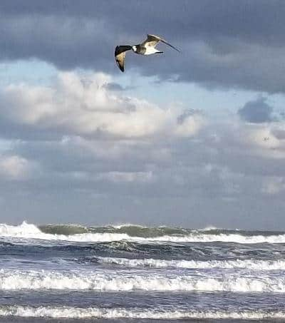 wrightsville-beach-bird